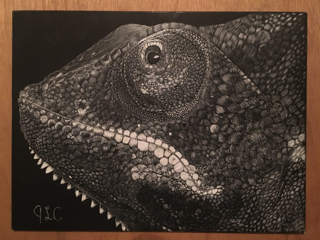 Veiled Chameleon Scratch Board