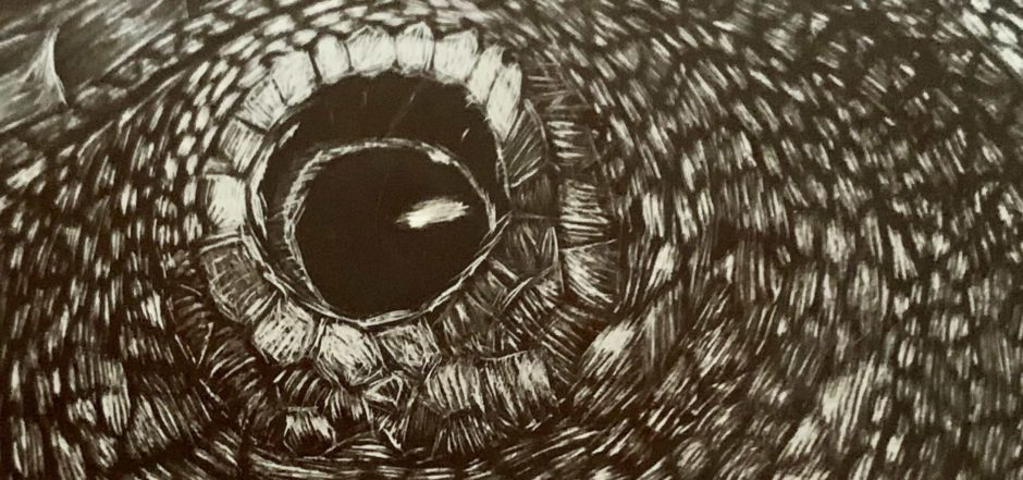 Veiled Chameleon Scratchboard Eye (Closeup)